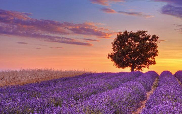 Franse les volg je in Frankrijk als de lavendel bloeit